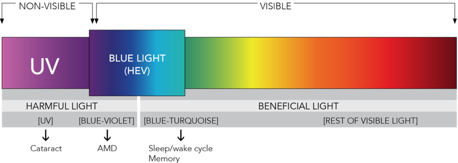 Blue light spectrum - Blueberry Glasses